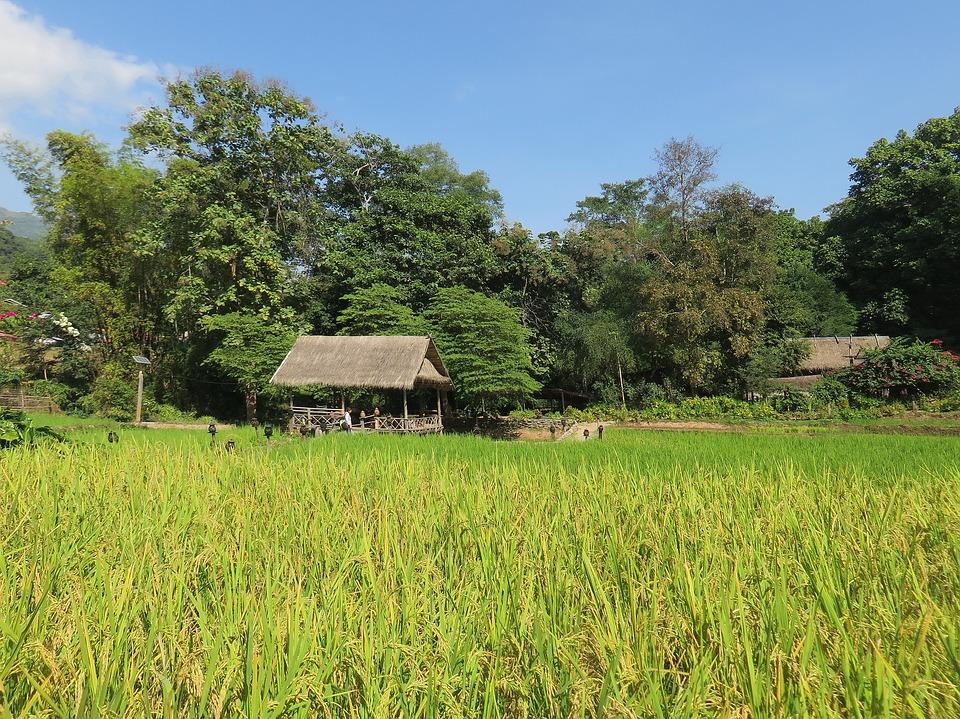 Laos_Rizière_Camu_Lodge