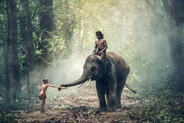 laos-foret-elephant